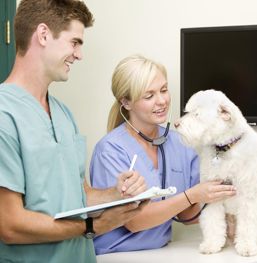 Veterinary Technology Associate S Degree De Platt College